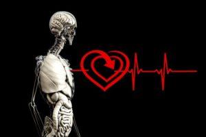 anatomy-2328534_640