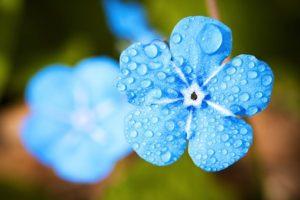 flower-2197679__340