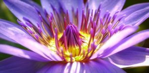 flower-2919284__340