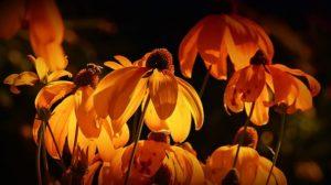 flowers-3215188__340