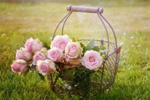 roses-1566792__340