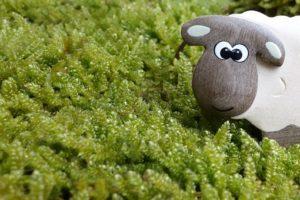 sheep-453812__340