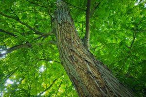 tree-3450448_640