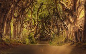 trees-3464777__340