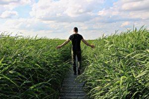 high-grass-1504280_640