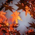 11月23日(金)の祝日について